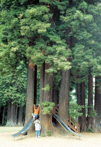 Sequoia Park with Slides