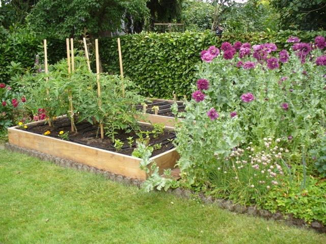 My vegetable garden essay