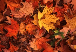 composting fall leaves