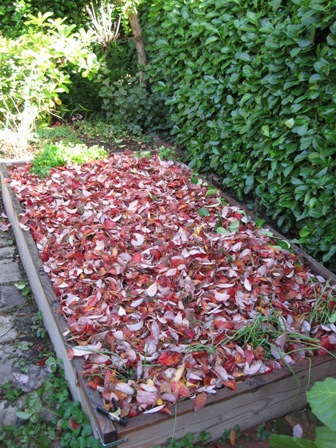 mulching garden beds with leaves in fall