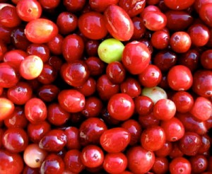 raw cranberries for homemade cranberry sauce