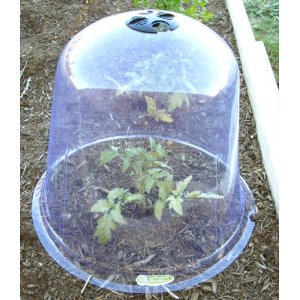 DIY Garden Cloches Made from Recycled Materials
